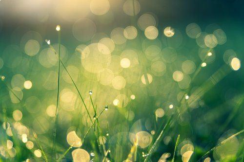 雫に濡れた芝生の写真