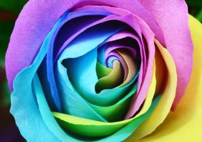 カラフルなバラの写真