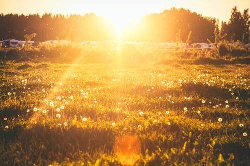 オレンジ色の太陽に照らされた野原の写真