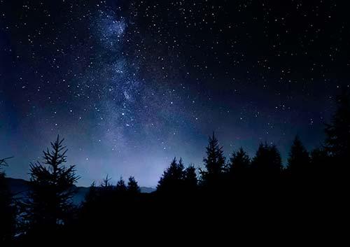 夜の星空と木々のシルエット写真