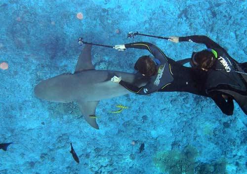 ダイビングでサメを撮影している写真