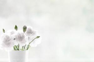 白色のカーネーション