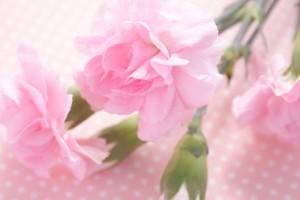 ピンクのカーネション