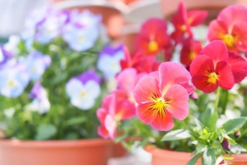鉢物の植物のイメージ